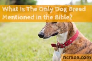 dog breed bible