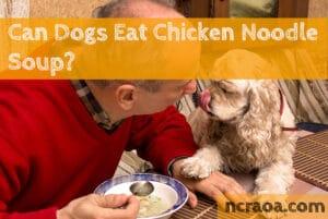 dog eat chicken noodle soup