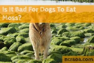 dog eat moss
