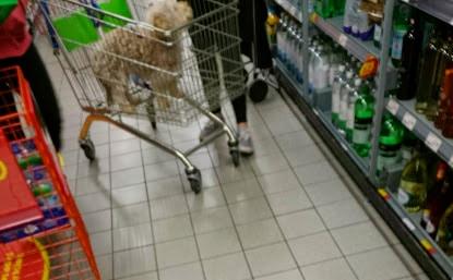 dog in trolley in ASDA