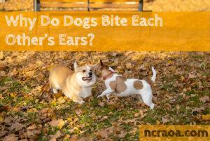 dogs bite ears