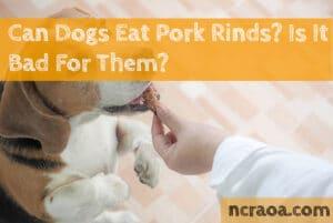 dogs eat pork rinds