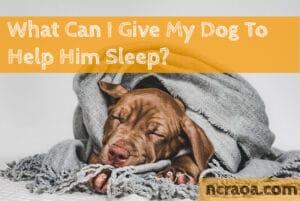 help dog sleep