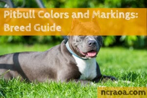 pitbull colors and marking
