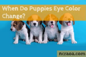 puppy eye color change