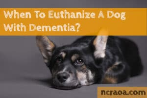 put down dog with dementia
