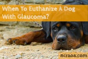 put down dog glaucoma