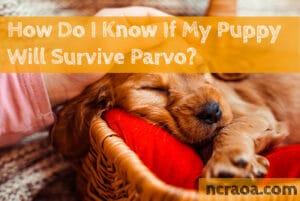 will puppy survive parvo
