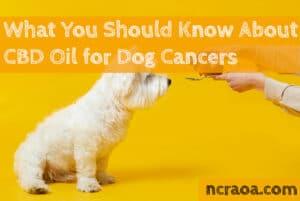 cbd for dog cancer