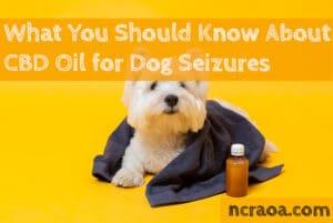 cbd oil dog seizures