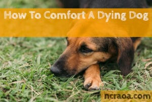 how to comfort a dying dog