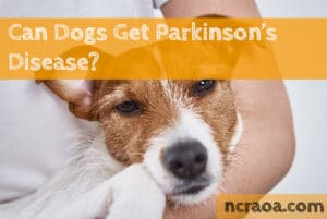 can dogs get parkinsons