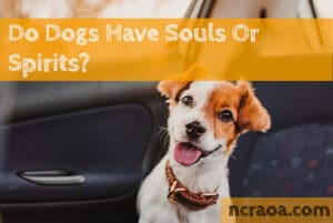 do dogs have souls or spirits