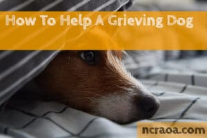 how to help a sad and grieving dog