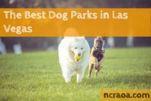 las vegas dog parks