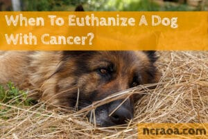 put down dog with cancer
