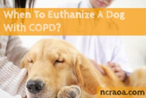 put down dog copd