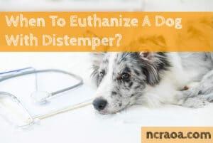 put down dog distemper