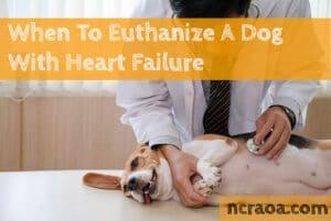 put down dog heart failure