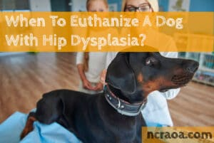 When To Euthanize A Dog With Hip Dysplasia?
