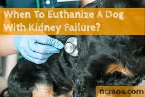 put down dog kidney failure