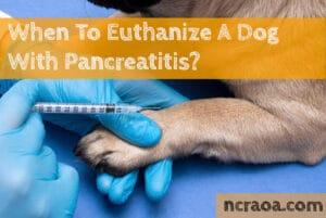 when put down dog pancreatitis