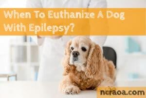put down dog with epilepsy