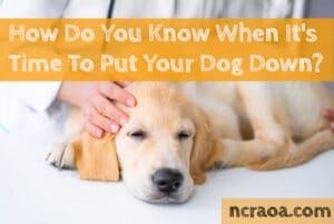 when to put down dog