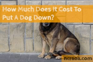 cost put down dog