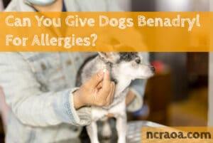 give dog benadryl for allergy