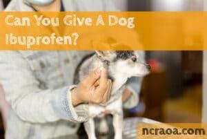 dog ibuprofen