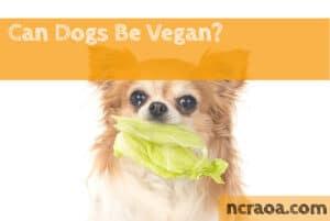 dogs vegan diet