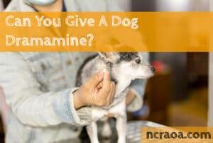 give dog dramine