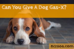 give dog gas-x