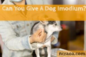 give dog imodium