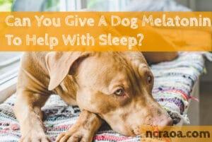 give dog melatonin