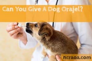 give a dog orajel