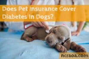 pet insurance diabetes