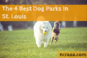 st louis dog parks