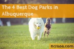 albuquerque dog parks