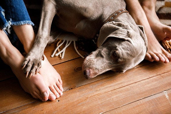 dog at owners feet