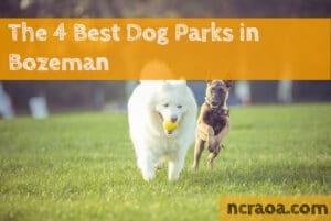 bozeman dog parks