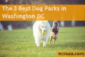 dc dog parks