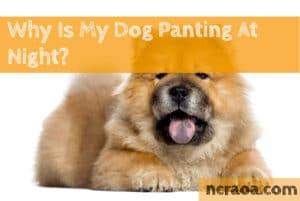 dog panting at night