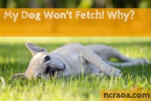 dog won't fetch