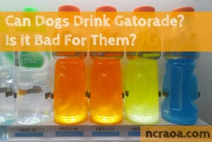 dogs drink Gatorade