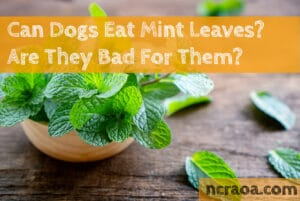 can dogs eat mint leaves