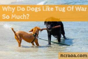 why dogs like tug of war