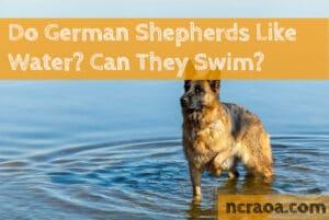 do german shepherds like water