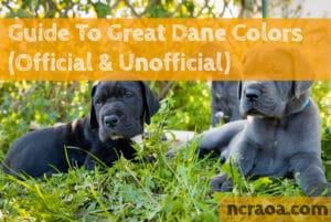 great dane colors